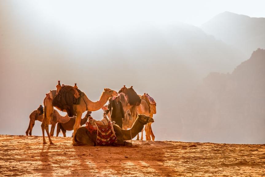 11-Day Trek In Egypt: ApplicationsOpen